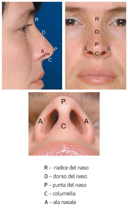 piramide-nasale-meneghini